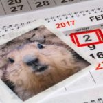 Groundhog Day and Books