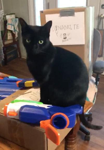 [photo: Attack Cat Video]